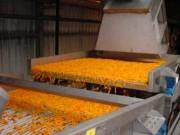 Tapis vibrant industriel pour carottes
