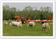 Remorques agricoles à plateaux fourragers - 4 roues et 6 roues  - Dimension plateau de 4.00 x 1.98 à 12.00 x 2.40
