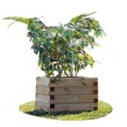 Bac à Fleurs en bois de pin - Dimensions (L x P x H) cm : 100 x 100 x 50
