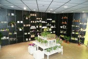 Agencement magasin fleuriste
