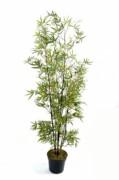 Arbre bambou black - Hauteur : 150 cm