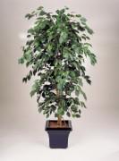 Arbre ficus semi naturel - Hauteur : 120 cm