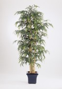 Arbre giant bamboo - Hauteur : 210 cm