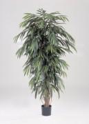 Arbre longifolia semi naturel - Hauteur : 150 cm