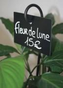 Ardoise prix pour fleuristes - Dimensions (cm) : 8 x 12