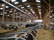 Bâtiment d'élevage - Charpente métallique ou bois