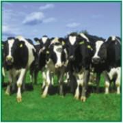 Certification ISO 22000 agroalimentaire - Spécifique à la sécurité alimentaire