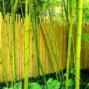Clôture bambou