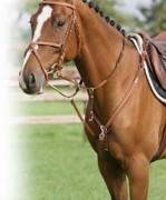 Collier de chasse en cuir et élastique - Plus d'aisance pour le cheval