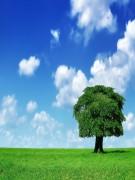Conception jardin paysagiste Bio Ain - Utilise des produits bio et matériel eco durable
