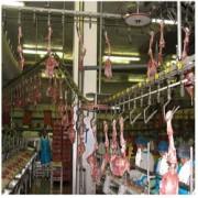 Convoyeur à courroie plastique - Convoyeur Spécial agro alimentaire