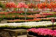Externalisation inventaire Jardinerie - Inventaire idéal pour les espaces verts