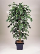 Ficus exotique artificiel