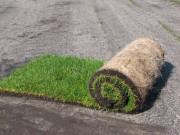 Gazon naturel en rouleau - Pour les jardins les terrains de sport ou les salons et foires expositions