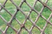 Haie en osier vivant tressage losange - Haies en branches de saule tressées lors de la plantation