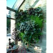 Jardin vertical d'intérieur - Isolation - Esthétique