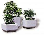 Jardinière en béton écologique carrée - Dimensions (L x P x H) : 60 x 60 x 33 cm