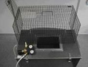 Les caissons à euthanasie pour pigeons