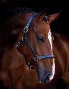 Licol cheval en cuir - En cuir doux