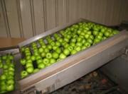 Ligne de lavage de pommes - Industrie agroalimentaire