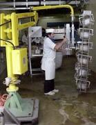 Manipulateur industriel pour jambon - Alimentaire