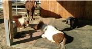 Matelas confort pour chevaux - 2 dimensions sont disponibles (L x l) : 1.80 x 2.40 m ou 2.20 x 2.90 m