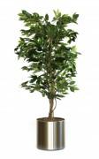 Plante artificielle ficus benjamina vert - Ficus Benjamina, vert