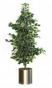 Plante artificielle ficus exotica - Ficus Exotica aux couleurs variées