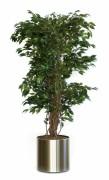 Plante artificielle ficus liana - Ficus Liana vert