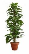 Plante artificielle scindapsus vert - Scindapsus, vert