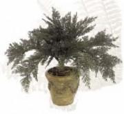 Plante d'extérieur juniperus - Traitée anti-UV - plus d'arrosage