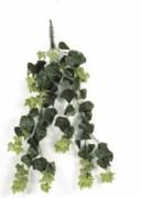 Plante d'extérieur lierre - Traitée anti-UV