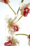 Plante fleurie artificielle cybidium