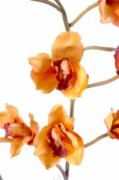 Plante fleurie cybidium semi naturelle - Cybidium artificielle