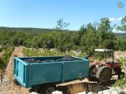 Remorque viticole à bac à vendange - Bac amovible à vendange  -  Capacité : 6120 L