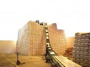 Sauterelle transport sac - Débit de 60 à 600 T/ h