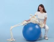 Squelette flexible 1m70 - Squelette flexible 1m70