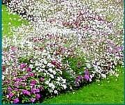 Tapis horticole 60 variétés - THM annuel modéle 1