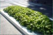 Tapis horticole géraniums THM vivace - Tapis géraniums