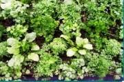 Tapis horticole THM champêtre aromate variées - Tapis aromates 1