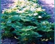 Tapis horticole THM champêtre fraiser - Tapis THM fraiser