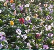 Tapis horticoles