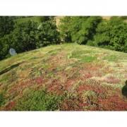 Toiture végétale pour maison bois - Un principe esthétique et écologique