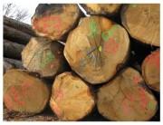 Traceur forestier durée marquage 6 à 12 mois - Durée de marquage : 6 à 12 mois