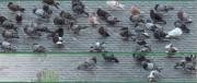 Traitement des nuisibles pour professionnel - Destruction des rongeurs rats et souris
