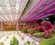 Tube led pour éclairage horticole - Puissance : 200 à 800 W