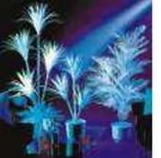 Végétaux Fluorescents - Végétaux Fluorescents