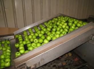 Ligne de lavage de pommes - Devis sur Techni-Contact.com - 1