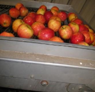 Ligne de lavage de pommes - Devis sur Techni-Contact.com - 2