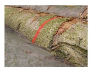 Aérosols marquage forestier - Devis sur Techni-Contact.com - 3